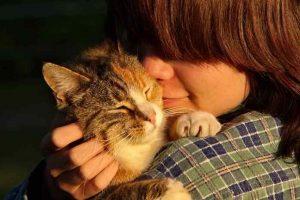 cara aman pelihara kucing