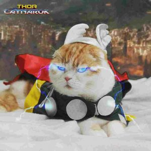 cosplay Kucing