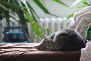 kucing tinggal di dalam rumah