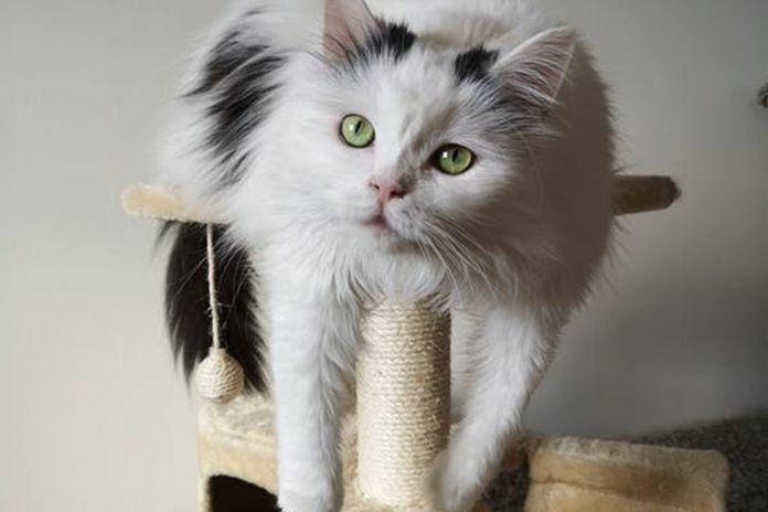 cat tree untuk kucing