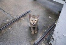 hentikan penyiksaan kucing