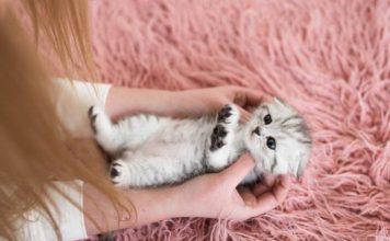 bagian tubuh kucing boleh disentuh
