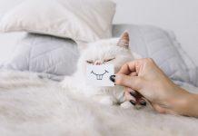 tanda kucing menyayangimu