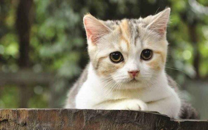 enyebab Kucing Stres
