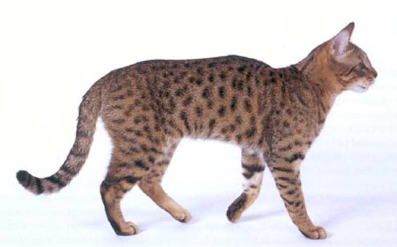 Mengenal Bagian Tubuh Kucing Catlovers Id