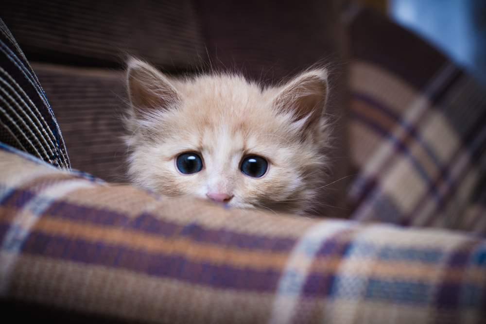 Kucing Catlovers Penakut Begini Cara Mengatasinya Catlovers Id