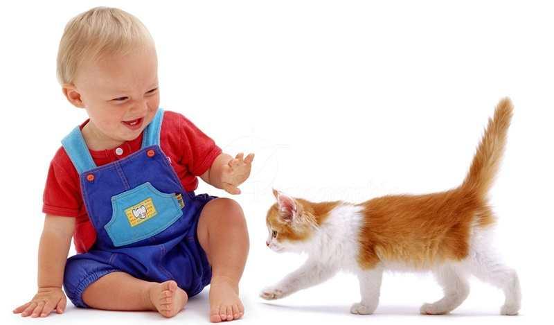 Hasil gambar untuk anak bermain dengan hewan peliharaan