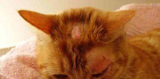 kucing kesayanganmu terserang ringworm