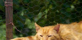 suara kucing hilang