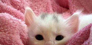 bolehkan anak kucing dimandikan