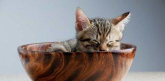 kucing mengeluarkan air mata