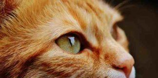 kucing bengong pertanda lihat hantu