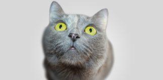 pelihara kucing turunkan risiko terkena asma