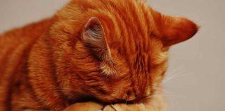 suara keras bisa sebabkan kucing stres