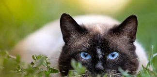kenapa kucing gemar berkelahi