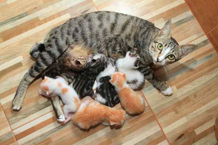 Nutrisi Untuk Kucing Menyusui Catlovers Id