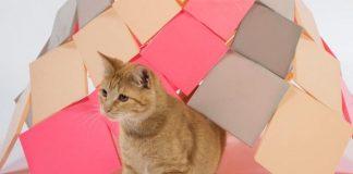 memelihara kucing di rumah minimalis