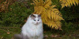 5 penyakit ini mudah menyerang kucing