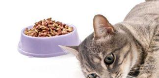 kucing tidak nafsu makan