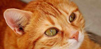 pelihara kucing