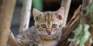membangun karakter kitten