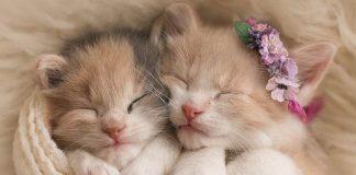 Mengadopsi Kitten