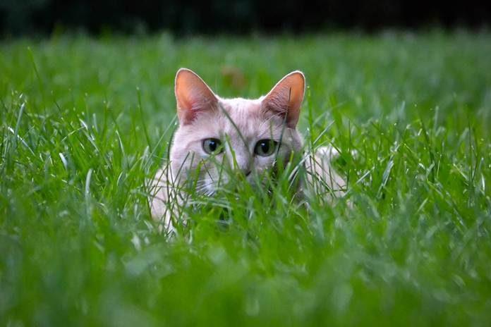 mendekati kucing penakut