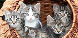 indera pada anak kucing