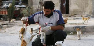 kucing-kucing di Suriah