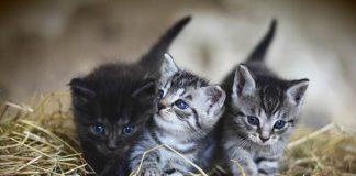 kucing bisa jadi hewan peliharaan