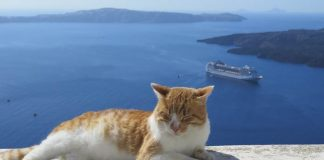 kucing berlayar