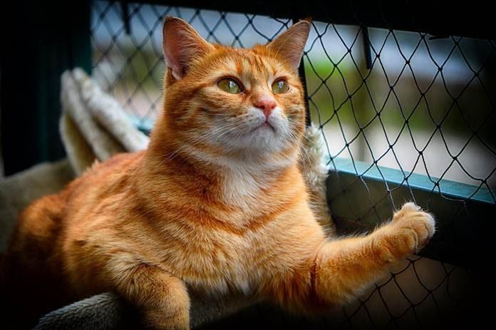 kucing jadi hobi menyendiri