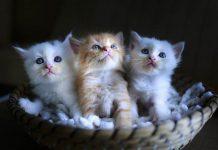 penjualan anak kucing dan anjing