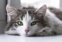 video kucing