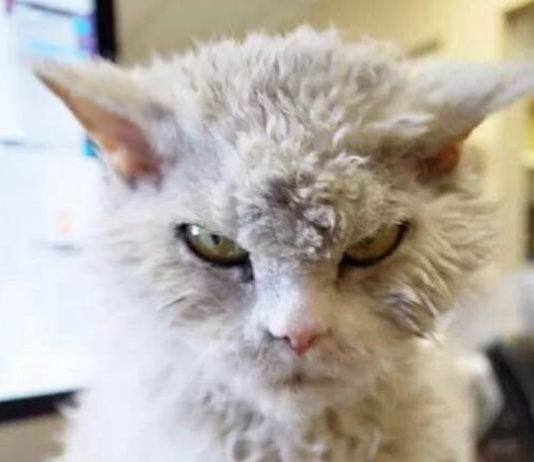kucing berwajah marah