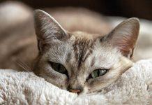 kucing suka bangun di malam hari