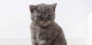 pasir kucing