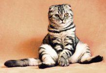 kucing meniru perilaku pemiliknya