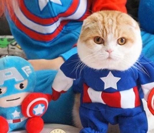cosplay Kucing