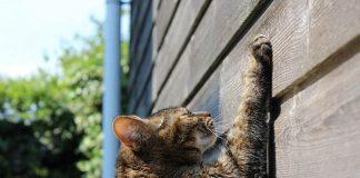 agar kucing berhenti mencakar