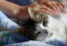 cara menghindari kucing mencakar